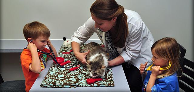 Kingsbrook Animal Hospital Veterinarians