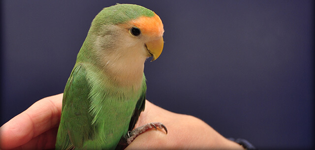 Avian Veterinary Care in Frederick MD