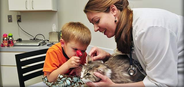 Jennifer Walker, Veterinarian at Kingsbrook Animal Hospital