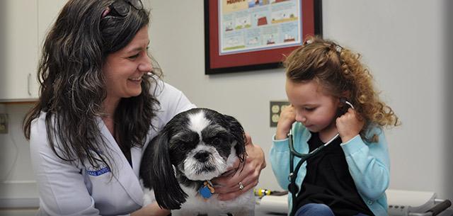 Jenny Lynch, Veterinarian at Kingsbrook Animal Hospital