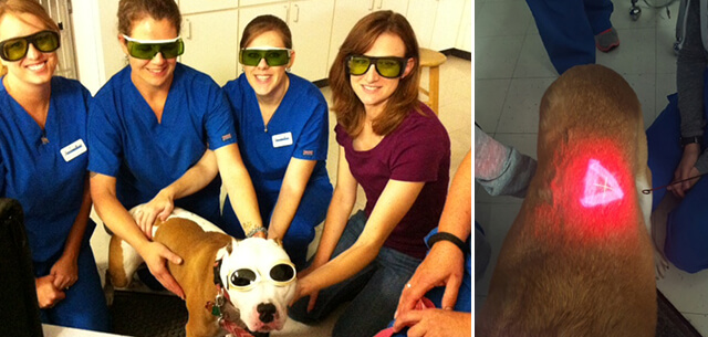 Laser Therapy for dogs and cats in frederick md