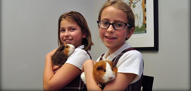 Get to know Kingsbrook Animal Hospital