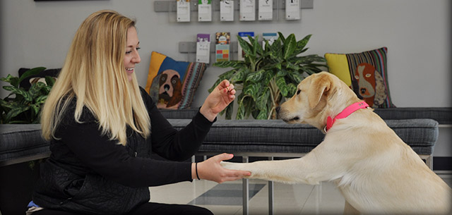 Meet our Receptionists at Kingsbrook Animal Hospital