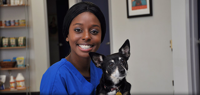 Meet our Receptionists, Veterinarian in Frederick MD