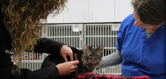 Dr. Dannis at Kingsbrook Animal Hospital