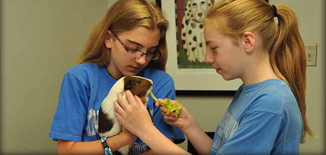 Kingsbrook Animal Hospital Vet Academy