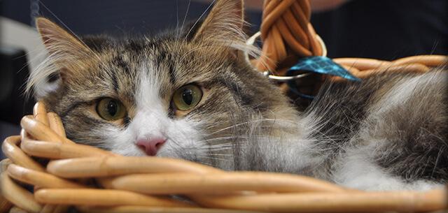 Veterinary Emergency at Kingsbrook Animal Hospital