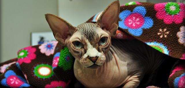 Cat Veterinary Care at Kingsbrook Animal Hospital