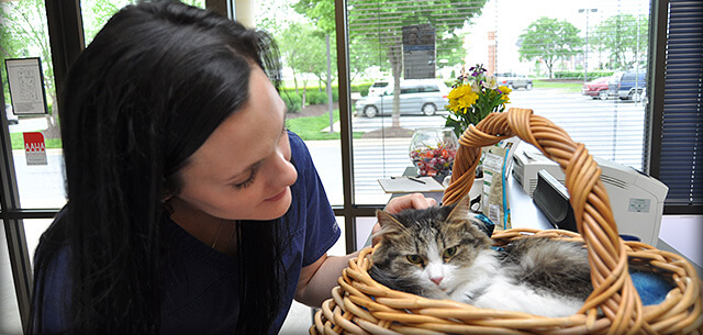 veterinary dermatology services at kingsbrook animal hospital