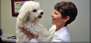 meet adrianne cardella veterinarian