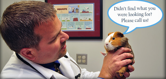frequently asked questions at kingsbrook animal hospital