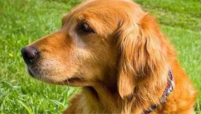 grain free pet food diets