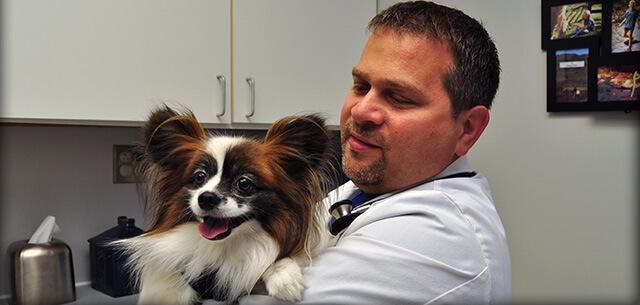 meet morse davis veterinarian