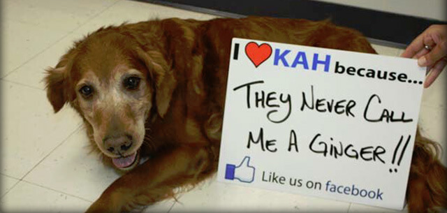 online reviews for kingsbrook animal hospital