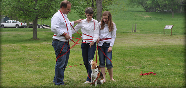 pet behavior and training at kingsbrook animal hospital