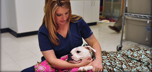 veterinary hospice care at kingsbrook animal hospital