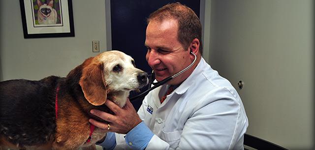 senior pet health care in frederick maryland